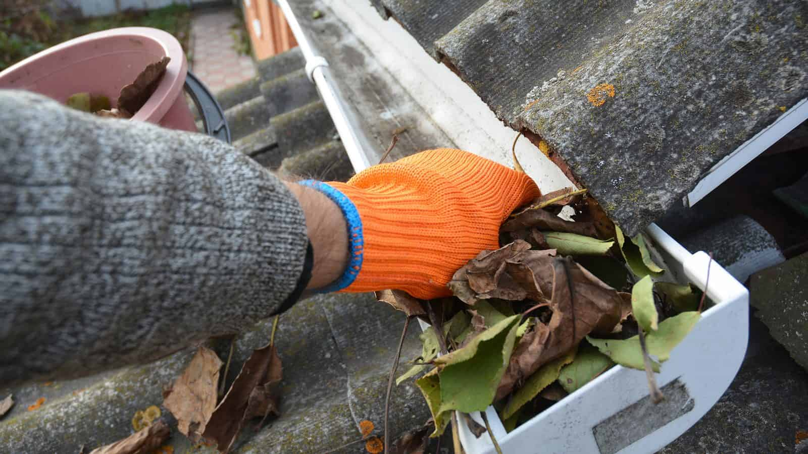 Clear Up Properties From Autumn Weather